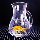 Goldfish in Glass Carafe