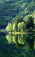 Forest reflecting in lake, Norway