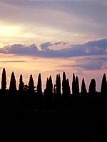Cypress trees at dusk, Tuscany, Italy