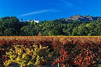 View at Sterling vineyards in the sunlight, Napa Valley, California, USA, America