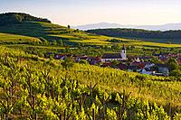 View over vineyards at Jechtingen, Sasbach am Kaiserstuhl, Baden_Wuerttemberg, Germany, Europe