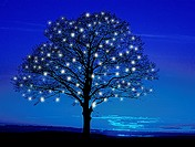 blue tree with fairy lights