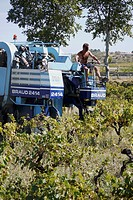 Large grape harvesters are used in the vineyards Southern France, to pick the ripe grapes in September, for the 'vendage.'