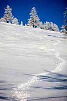 Traces on snow, Styria, Austria
