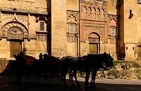 Carriage in front of the cathedral, Mezquita_Catedral, Cordoba, Province Cordoba, Andalusia, Spain, Mediterranean Countries