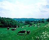 Milkers at grass North Rhine_Westphalia, Germany