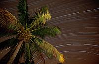 Stars rotation and palm, Aitutaki, Cook Islands