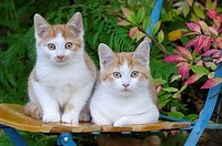 Two Kittens sitting on garden chair
