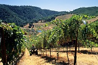 Stevenot Winery, near Murphys Ranch, Calaveras County, California