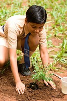 Young boy in planting sapling plantlet in garden , Bombay Mumbai , Maharashtra , India MR688