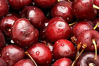 Bunch of Fresh Cherries