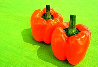 Orange peppers on green background
