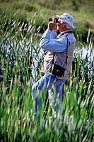 Bird Watching From a Marsh