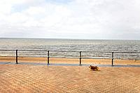 A dog walking on promenade, North Sea, Belgium