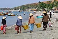 Vietnam, Mui Ne, fishermen wifes cleaning and sorting fishes