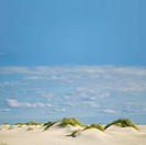 dunes on Amrum island, Germany, Schleswig_Holstein, Amrum