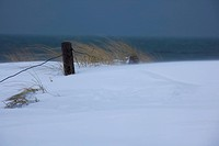 snowcovered dunes in storm, Germany, Mecklenburg_Western Pomerania, Wustrow, Darss