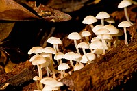Nature, fungus, Park Estadual Pico of Marumbi, Paraná, Brazil