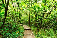 Hawaii, Maui, Kipahulu, Haleakala National Park, Boardwalk through lush jungle on the Pipiwai trail