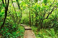 Hawaii, Maui, Kipahulu, Haleakala National Park, Boardwalk through lush jungle on the Pipiwai trail