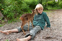 roe deer Capreolus capreolus, boy in the garden playing with a fawn, Germany