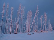 winter landscape in Bayerischer Wald in evening light, Germany, Bavaria, Bavarian Forest National Park, Dreisesselberg