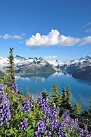 Garibaldi Lake from Panorama Ridge, Garibaldi Provincial Park, British Columbia, Canada