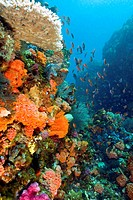 reef with a wide and colourful range of species, Indonesia