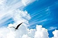 Bird in flight against stunning blue sky with clouds freedom con