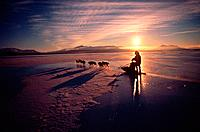 Dog leader with sledge dogs at dawn on frozen lake