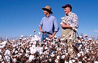 Two Farmers in Cotton Field