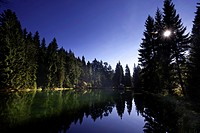 romantic forest lake and coniferous forest, Germany, Saxony, Schneckenstein