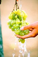 Washing Bunch of Grapes