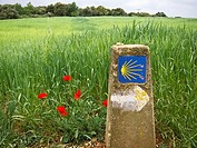 Marker along the Camino de Santiago with red poppies