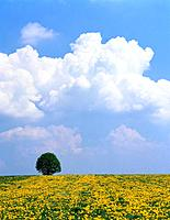 Single Tree in Dandelion Meadow