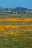 California Farm Country