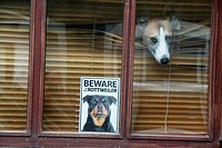 beware rottweiler dog sign notice in house home property window