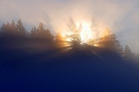 sunrise over spruce forest in a foggy morning, Germany