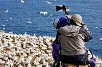 Photographer taking Pictures of Gannets Morus bassanus on Rocks, Cape St. Mary´s Ecological Reserve, Avalon Peninsula, Newfoundland