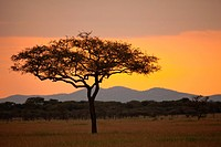 Sunset on the Serengeti, Serengeti National Park, Tanzania. the Serengeti is a UNESCO World Heritage Site.