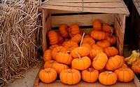 Crate of pumpkins