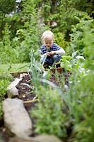 Toddler boy examining plants in backyard