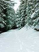 Footprints at winter forest