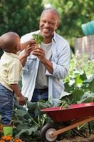 Black grandfather and grandson gardening