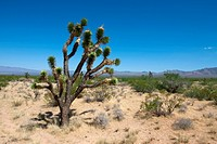 Mojave park