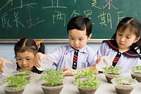 Schoolchildren Watering Plants in Classroom