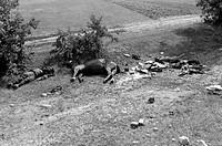 events, Second World War / WWII, Russia 1941, Soviet column after German air raid between Bialystok and Vaukavysk, fallen Soviet soldiers and dead hor...