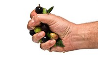 Handful of olives.