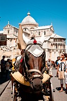horse carriage in piazza dei miracoli, pisa, tuscany, italy