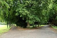 Go right or left, Combourg castle garden, Ille-et-Vilaine, Brittany, France